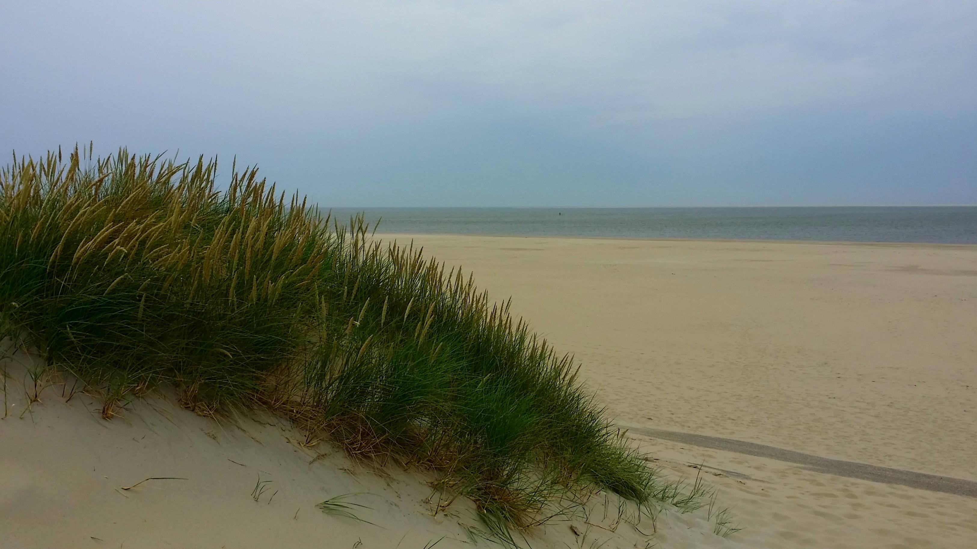 Texel (208a)